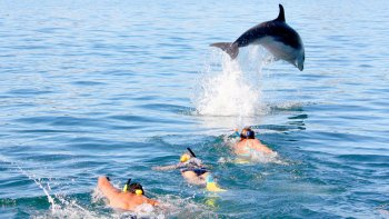 Dolphin Discovery Cruise