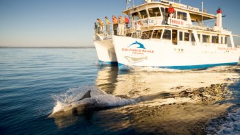 Full-Day Jervis Bay & South Coast Tour