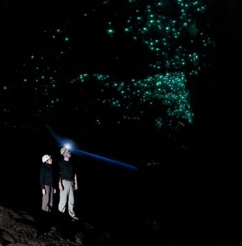 Glowworm Cave Tour