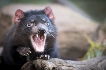 Full-Day Tasmanian Devil Park & Port Arthur Tour from Hobart