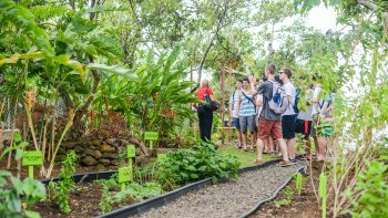 Essence of St Lucia: Gardens & History Tour