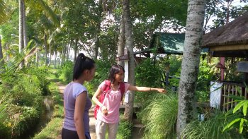 Private Bali Herbal Walk