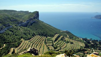 Private Half-Day Le Castellet, Cassis & Bandol Wine Tasting Tour
