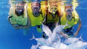 Actividades,Actividades acuáticas,Tour por Miami