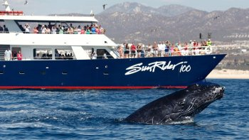 Whale-Watching Sunset Cruise with Dinner