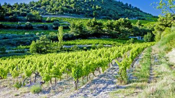 Full-Day Wine Tasting on the Road of Châteauneuf-du-Pape