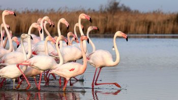 Half-Day Secret Camargue Tour