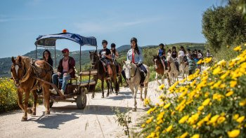 Horseback Riding at Finikia Mountain & Lunch from Heraklion