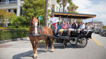 Residential Horse-Drawn Carriage Ride