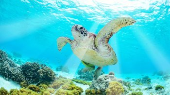 4-Day Tropical Reef and Rainforest Tour