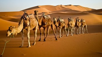 Zagora Dunes & Valley of 1000 Kasbahs Overnight Tour