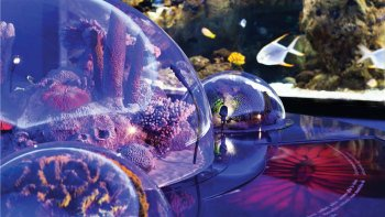 Istanbul Aquarium Admission & Aqua Florya Shopping Mall