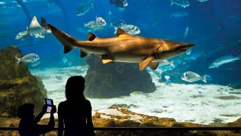 L'Aquarium Barcelona Tickets