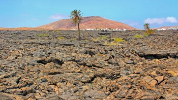 Trekking Tour in the South of Lanzarote