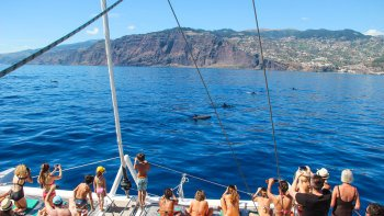 Madeira Half-Day Catamaran Cruise