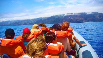 Whale-Watching Tour & Dolphin Encounter