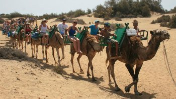 Camel Ride Along Maspalomas Natural Reserve