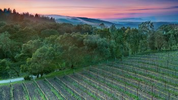 Full-Day Vintage Wine Country Tour