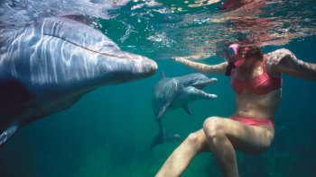Swimming with Dolphins at Black River