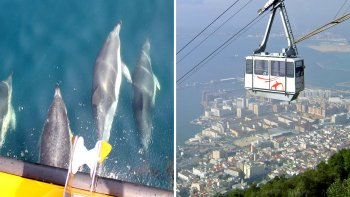 Combo Tour: Dolphin Watching Cruise & Cable Car Ride