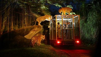Night Safari Experience at Bali Safari & Marine Park