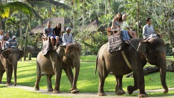 Elephant Safari Park & Optional Elephant Ride