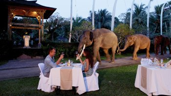 Night Safari with Elephant Show & Dinner