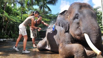 Bathe & Breakfast with the Elephants
