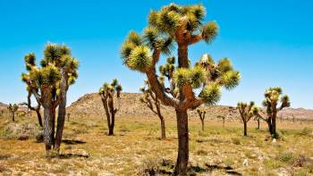 Joshua Tree National Park Van Tour