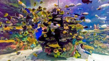 Ripley's Aquarium of Canada Admission Tickets