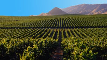 Private Temecula Valley Wine Tasting Tour