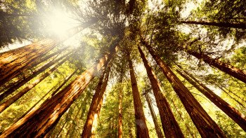 Muir Woods, Giant Redwoods & Sausalito