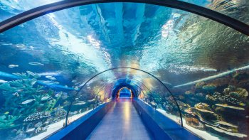 Antalya Aquarium with Hotel Transfers