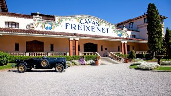 Full-Day Wine & Cava Tasting Experience