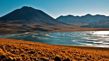 Altiplanic Lagoons & Atacama Salt Flat Full-Day Tour