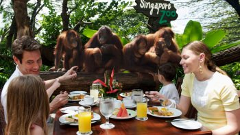 Jungle Breakfast with Orangutans at Singapore Zoo