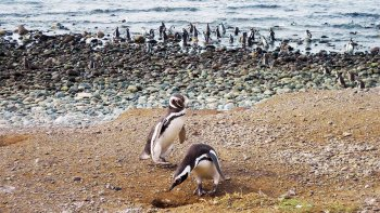 Half-Day Adventure to Penguin Colony in Magdalena Island