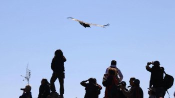 5-Day Condor Flight & Lake Titicaca Tour
