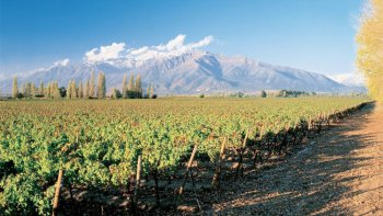 Private Full-Day Tour to Concha y Toro Winery in Maipo Valley