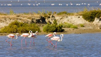 Half-Day Tour of the Camargue
