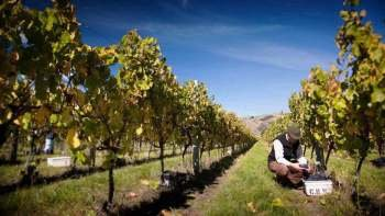 Picton Cruise Excursion - Marlborough Wine Tour