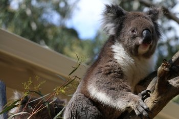 Cleland Wildlife Park Excursion including Mount Lofty Summit
