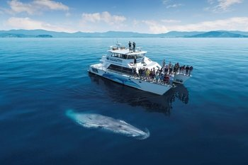 Whale & Dolphin Conservation Cruise in the Hauraki Gulf