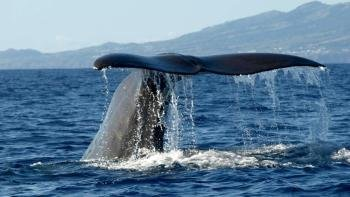 Whale & Dolphin Watching Day Trip