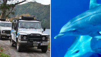 Combo Tour: Swimming with Dolphins & Sete Cidades Jeep Safari