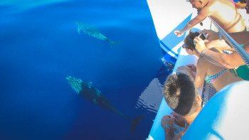 Dolphin & Whale Watching Cruise by Catamaran