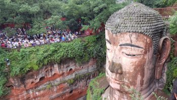 Full-Day Panda & Leshan Buddha Tour with Bullet Train