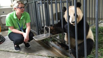 Full-Day Panda Volunteer Program at Dujiangyan Base