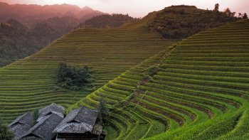 1-Day Tour of Longji Rice Terraces