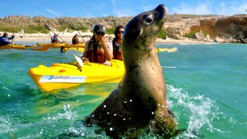 Penguin & Seal Islands Kayak Day Tour